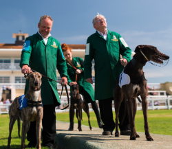 Crowds set to flock to Towcester for Greyhound derby...